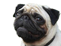 Pug_for_pop_up.png