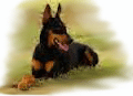 Doberman-for-PU.png