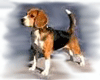 Beagle-for-PU.png