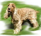 Cocker-Spaniel-for-PU.png